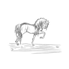 horse in sketch style, vector illustration