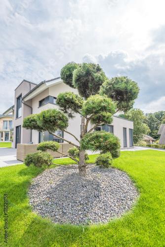 gepflegter vorgarten mit rollrasen und bonsai nadelbaum. Black Bedroom Furniture Sets. Home Design Ideas