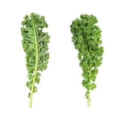 resh green kale leaves