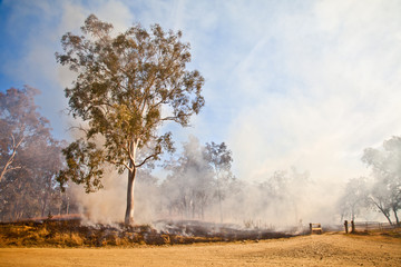 Gum Tree Bush Fire Australia