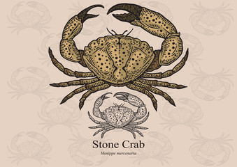 Stone crab. Vector illustration for artwork in small sizes. Suitable for graphic and packaging design, educational examples, web, etc.
