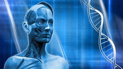 Medical background dna , Human anatomy model of a female in realistic 3D rendering