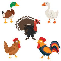 Isolated Farm birds in cartoon style. Vector illustration