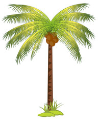 Palm with coco