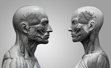 Human anatomy background of a male and female - muscle anatomy of the face neck and shoulder , medical image reference of human anatomy in black and white in realistic 3D rendering