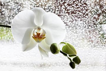 orchidée blanche derrière vitre après la pluie