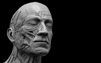 Human anatomy - muscle anatomy of the face and  neck in 3d render