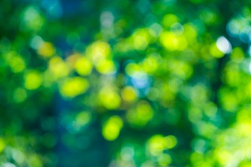 Forest bokeh background