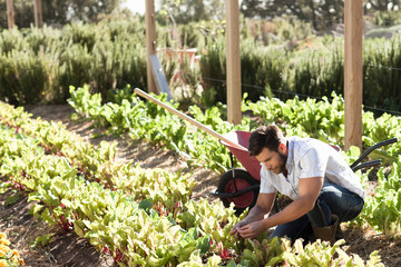 Man working in vegetable garden