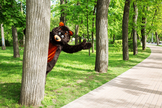 actor dressed as bear peeking out from behind a tree in a park with lots of trees and stone path