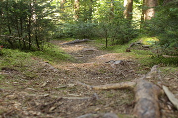 Waldweg Makro