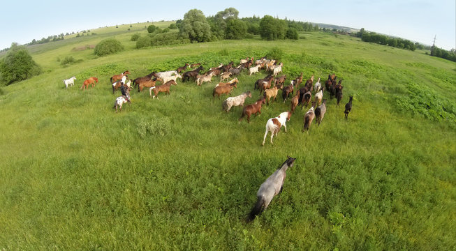 Aerial view of the group of horses eating grass in a field on the horizon.