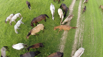 Aerial view of the horses eating grass in a field.
