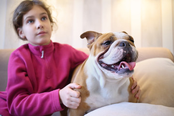 Girl and English bulldog sitting on a couch in the room, focus on the dog