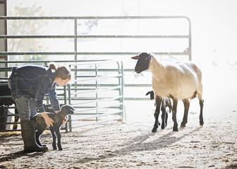 Sheep watching mixed race girl petting lamb in barn