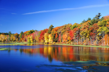 Printed kitchen splashbacks Autumn autumn colorful trees under morning sunlight reflecting in tranquil river