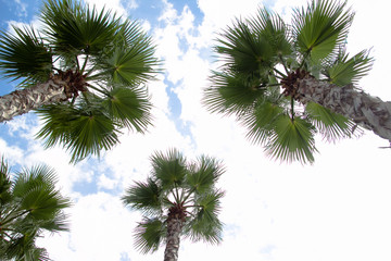 palm tree top view