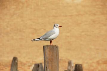 Seagull before Venice Arsenal brick wall