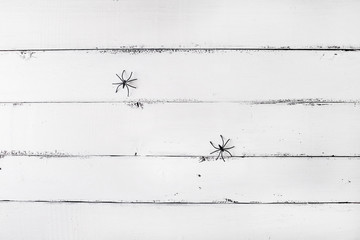 White wooden background with two spiders. Background for Halloween. Copyspace