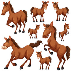 Set of brown horse in many positions