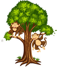 Two monkeys on the tree