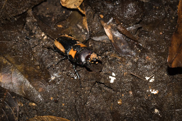This is a photo of one kind of lucanus, was taken in XiaMen botanical garden, China.