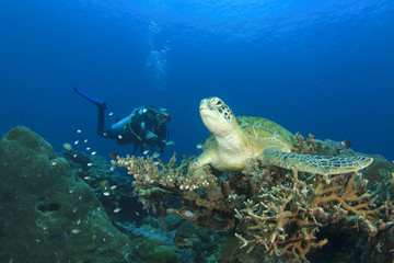 Sea Turtle Scuba Diver Coral reef