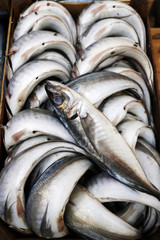 Close up of pile of fresh fish