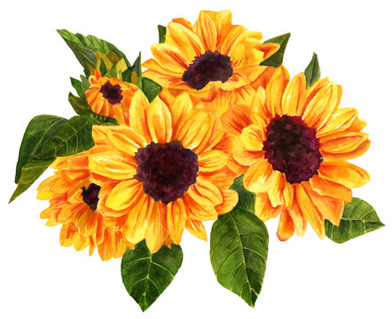 Watercolor drawing of bouquet of vibrant golden yellow sunflower
