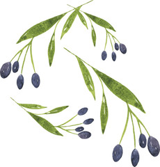 Set of olive branches drawn by watercolor on white background. Hand drawn vector illustration.
