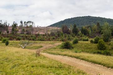 Summer landscape of Carpathian mountains