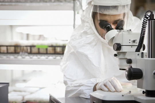 Middle Eastern scientist using microscope in laboratory