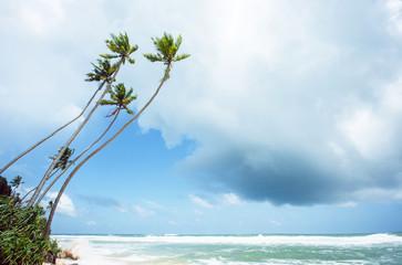 Untouched tropical beach