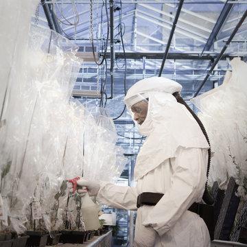 Scientist in clean suit working in greenhouse