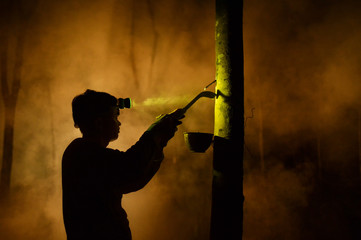 Man tapping rubber tree at night, Sakolnakhon, Thailand