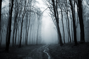 dark forest with fog background