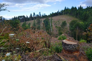 A hillside that has been mostly clearcut, with a tree stump in the foreground.