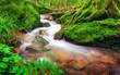 Klares Wasser fließt durch moosbewachsenen Waldboden