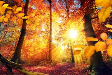 Wall Mural - Malerischer Herbst im Wald mit viel Sonne und lebendigen Farben