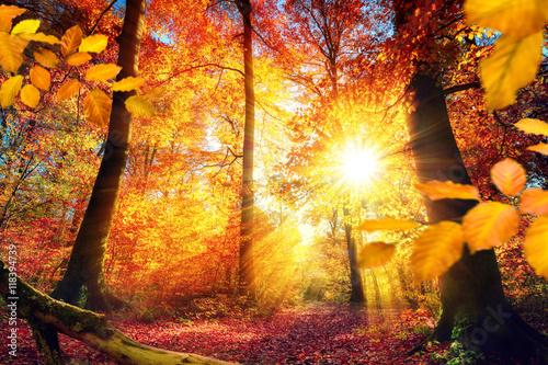 осенние проблески солнца  № 2961116 бесплатно
