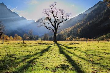 Ahornbaum im Herbst mit langem Schatten