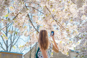 Caucasian woman female young girl take measure record sound camera device sakura japan cherry tree bloom