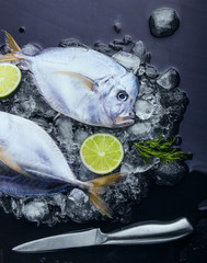 Fresh fish head and tail lime and dill on ice. Vomer or Selene steppenis