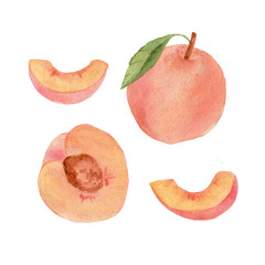 watercolor peach whole half and segments fruit and leaf illustration