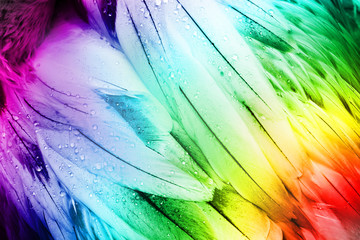 Feather Detail - Colorful Bird Feathers. Abstract Detail.