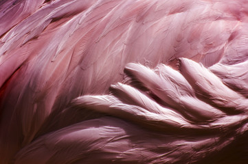 Foto op Canvas Flamingo Flamingo Feathers - Bird Abstract Background