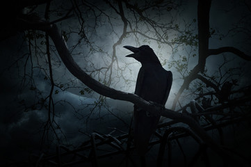Crow sit on dead tree trunk and croak over fence, moon and cloud