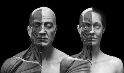 human anatomy background , medical reference image , muscle anatomy of the face neck chest and shoulder ,realistic 3D rendering in black and white
