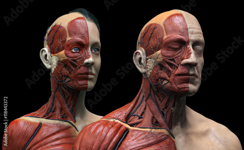 Human anatomy background , male and female , muscle anatomy