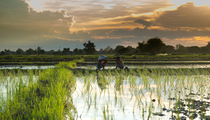Children sit back and relax after working farm rice, sunset. Fototapete